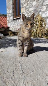 20160904_091800 Katze auf Samothraki