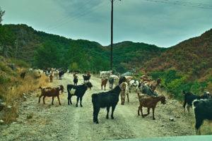 Auf dem Weg nach Kottani: Receps Gespiele versperren den Weg