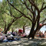 Unter Tamariskenbäumen