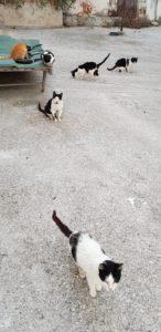 Aptera Katzen (2)