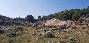 Kühe und Landschaft