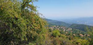 Mirabellen mit Aussicht auf den Ort Anatoli
