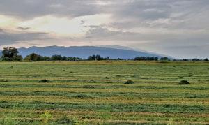 Heuernte bei Alexandrini im Pinios-Delta. Im Hintergrund das Ossa-Gebirge