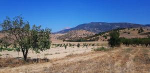 Vertrocknete Landschaft bei Sykourio. Mandelbäume wachsen hier, sonst kaum etwas. Ganz im Hintergrund sieht man die Baumfreie Spitze des Ossa.