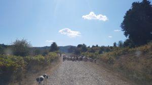 """Ausflug in das Hochland des Olymp, in Richtung der Ortschaft Kallipevki (""""schöne Kiefer"""") in 800 Meter Höhe"""